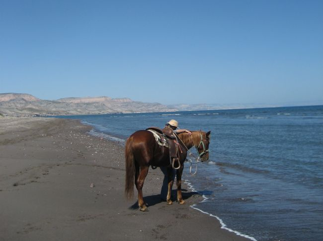 horse on beach at La Duna